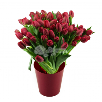 Букет из 55 Тюльпана