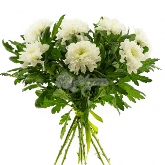 Букет из 9 крупноголовых хризантем