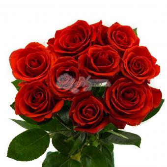 Букет из 9 Эквадорских роз