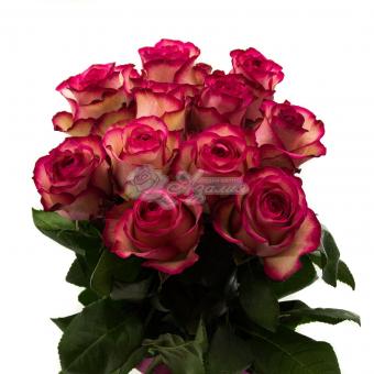 """Букет из 11 роз сорта """" Карусель """""""